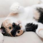 猫の暑さ対策はどうする?夏はエアコン必要?