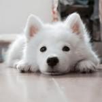 dog-617041_640