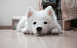 地震のとき犬は置き去りするしかない?避難所は?備えは?