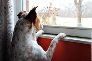 犬を室内で飼う際の抜け毛対策は?ブラッシング方法は?良い掃除機は?