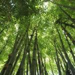 平塚の七夕祭り2015年の詳細は?花火はあがる?見所は?