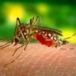 夜に蚊から赤ちゃんを守るには?蚊に刺されへの対処!ハーブは効く??