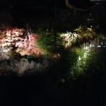 鎌倉の紅葉の見所は?時期はいつ?ライトアップはどこ?