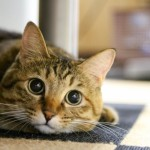 猫カフェで猫に好かれるには?喜ぶ触り方とおすすめ時間帯!