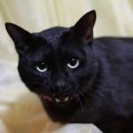 ハロウィンの仮装は黒猫を手作りで!耳やしっぽも可愛く作ろう!