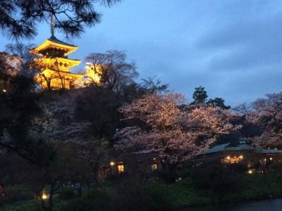 三渓園 夜桜 撮影スポット