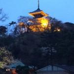三渓園の夜桜ライトアップの時間と食事のおすすめの場所を紹介!