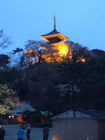 三渓園 夜桜 ライトアップ